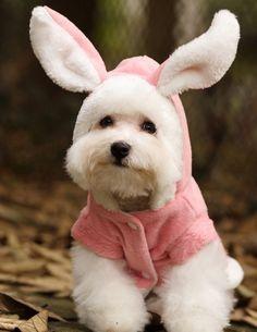 Sou um cachorro ou um coelhinho?