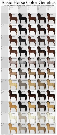 Basic Horse Color Genetics Chart by Echodus.deviantart.com on @DeviantArt