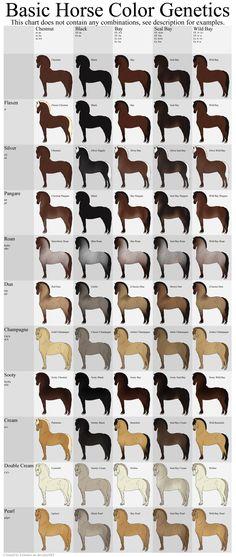 Basic Horse Color Genetics Chart by Echodus.deviantart.com on @DeviantArt