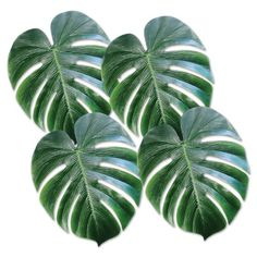 Beistle 54556 Tropical Palm Leaves, 13-Inch, 4 Count Beistle https://smile.amazon.com/dp/B00K3IKL80/ref=cm_sw_r_pi_dp_x_T-WQybBQD52CG
