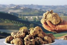 Truffles, chick peas, olives, fish, the rich kitchen of Le Marche! (in Italian)