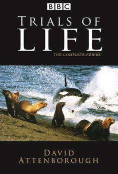 Передача Борьба за выживание (The Trials of Life)   BBC One   thevideo.one - смотреть онлайн