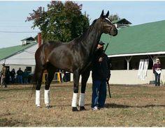 All hail Zenyatta the Queen! Zenyatta Horse, Thoroughbred, Honor Code, Triple Crown Winners, American Pharoah, Horse Racing, Race Horses, Majestic Animals, Gentle Giant