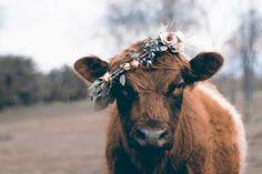 #flower #crown #cow