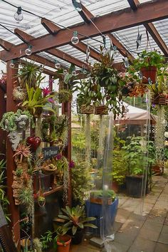 [New] The 10 Best Craft Ideas Today (with Pictures) - Stop by Clement Nursery i. [New] The 10 Best Orchids Garden, Orchid Plants, Small Backyard Gardens, Backyard Patio, Small Greenhouse, Greenhouse Ideas, Indoor Gardening Supplies, Orchid House, Garden Shelves