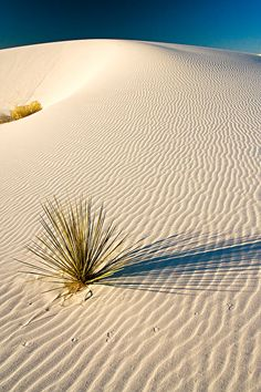 Beautiful sand dunes with sprigs of nature  ~
