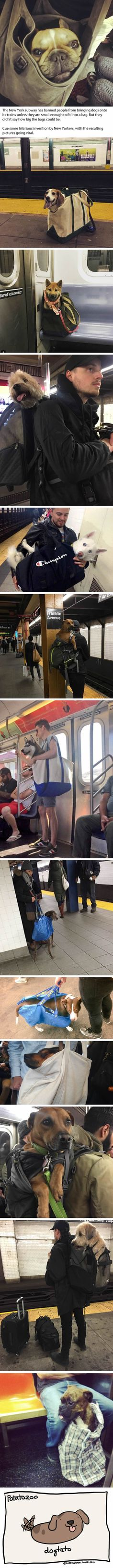 NYC Subway Banned Dogs Unless They Fit In A Bag, So These Owners Got Creative