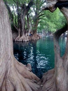 Lac de Camecuaro, Mexique - Travel tips - Travel tour - travel ideas Places To Travel, Places To See, Wonderful Places, Beautiful Places, Weird Trees, Natural Wonders, Nature Pictures, Amazing Nature, Beautiful World