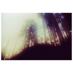 Olympic Forest | 2011 | Taken for #WITTR #CelestialLineage #35mm