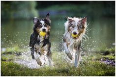 Was aus Sicht unseres Hundes eine lohnenswerte Ressource ist, legt er ganz alleine fest. Es entscheidet nur seine Sicht der Dinge. Das kann sehr vielfältig sein. Vom Lieblingsknochen über das Spielzeug zum Futter bis hin zu seinem Menschen - alles ist möglich.…
