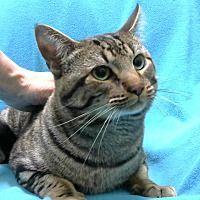 Saving Shelter Pets Inland Empire In San Bernardino California In 2020 Pet Adoption Pets Cat Adoption