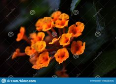 Macro shot of flowers in the garden.. Photo about orange, garden, flowers, white, petals, macro, green, tiny, ecosystem, leaves, ecosystems, natural, shot, spring, floral - 141230021