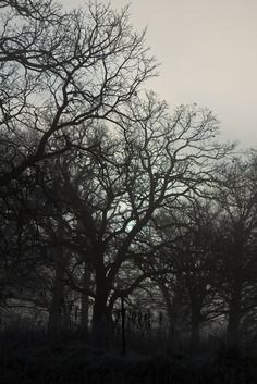Foggy Woods by nixter Woods, Trees, Wallpapers, Culture, Celestial, Explore, Sunset, Outdoor, Outdoors