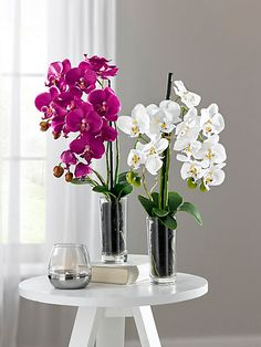 heine home - Orchidee Orchid Flower Arrangements, Vase Arrangements, Flower Vases, Flower Pots, Silk Flowers, Beautiful Flowers, Bird Of Paradise Wedding, Orchid Leaves, Heine Home