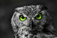 Photograph Eyes!! by Letizia Díaz on 500px