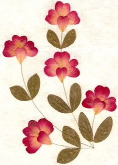 Pressed_Flowers_and_Leaves_by_Enchantedgal_Stock                              …