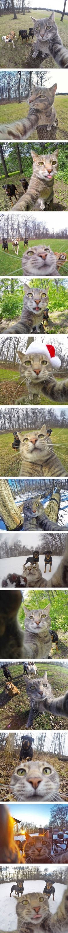 Why would manny be takin selfies when he is being chased by dogs???>>> this cat is so photogenic