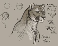 Cougar-construction-Demo