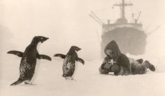 "The first Russian expedition to Antarctic continent in 1955. At the same time they have built a ""Mirnyi"" station there. It seems that penguins expressed interest for the stranger"