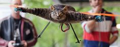 Helicopter-Kitty    http://www.bonz.ch/12591/die-helikopterkatze/