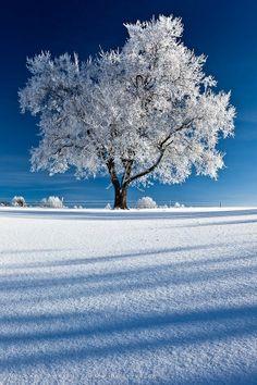 … - Most Amazing Photography (photo, picture, image, beautiful, amazing, nature, winter, snow, tree, landscape, white, blue)
