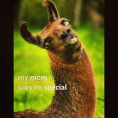 mentally disturbed llama | My mom says I'm special | Funnies | Pinterest