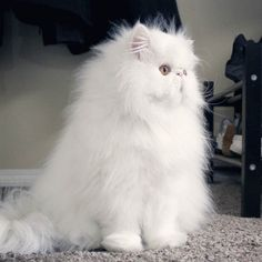 Roadblock at the front door! by @brimleycat... Follow us on Instagram :D #cats #cat #catlover #lovecats #funny #fun #cute #socute #feline #felines #felinefriend #fur #furry #paw #paws #kitten #kitty #kittens #kittycat #kittylove #fluffy #fluff