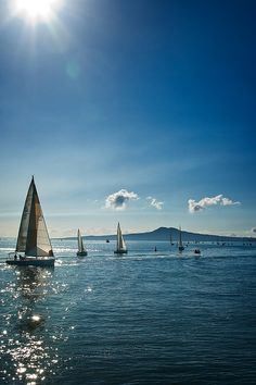 City of Sails, with Rangitoto Island backdrop, Auckland, New Zealand