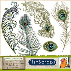 Digital Clip Art (Peacock Feathers) Graphics -  Plumes of Brightly colored bird feathers for personal or commercial use