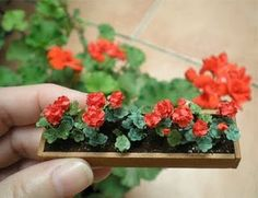 Miniature Geraniums and my real one.#Miniature #dollhouse #1:12
