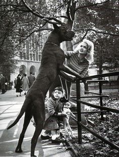 Jayne Mansfield, Mariska Hargitay, her Great Dane & Chi. I love how Mariska is trying to stand that teeny pup up on the fence like the Dane. 1 of my favorite pics Jayne Mansfield, Weimaraner, Old Photos, Vintage Photos, Mariska Hargitay, Vintage Dog, Mundo Animal, Big Dogs, Giant Dogs