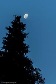 https://flic.kr/p/tQV1zU   Moon Silhouette