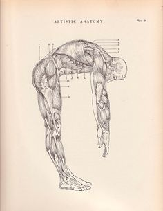 Vintage Print Human Male Full Figure Muscle Diagram 9 by AgedPage, $11.00