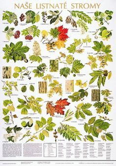 stromy a keře pracovní listy - Hledat Googlem Leaf Identification, Artist Problems, Learning For Life, Forest Plants, Animal Tracks, Forest School, Outdoor Survival, Science And Nature, Trees To Plant