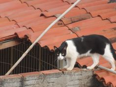 Gato Preto e Branco by Escritor Emanuel Carvalho