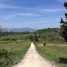 Dove andrai mai?  #igerspisa #pisa #volgopisa  #volgosocial #tuscany #igersyoscana #tuscanygram #perlestradedellatoscana #station #green #toscana #spring #volgotoscana #vivopisa #italy #vivoitalia #volgoitalia #igerstoscana #igersitalia #in_toscana #likes_toscana #slow #sky #green #landscape by parlascio