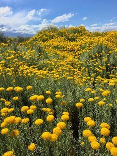 #PRIMAVERA #MENDOZA #FLORES Mendoza, Pumpkin, Tours, Outdoor, Scenery, Mountain Range, Adventure, Spring, Flowers