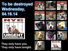 TO BE DESTROYED - 04/16/14 PITTIES ARE IN DANGER AGAIN. ALL THESE DOGS COUNT ON US!!! LET'S NOT LET THEM DOWN!!! PLEASE OPEN YOUR HEARTS AND PLEDGE, TAKE THEM HOME, BUT BE QUICK AS TIME IS TICKING AWAY. THE LIST IS VERY LONG AGAIN AND WE WE HAVE SOLITTLE TIME SO BE QUICK WHEN MAKING UP YOUR UP. https://www.facebook.com/media/set/?set=a.611290788883804.1073741851.152876678058553&type=3