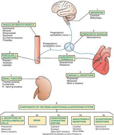 cardiac medications nursing students - Google Search