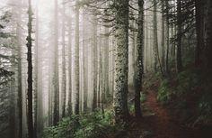 owls-n-elderberries:return to silver star mountain by manyfires...