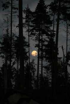 moon through the trees | nature photography
