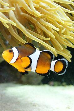 Finding Nemo at the Mystic Aquarium, CT