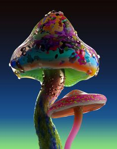 rare mushrooms - Google Search Mushroom Images, Mushroom Pictures, Mushroom Art, Mushroom Fungi, Wild Mushrooms, Stuffed Mushrooms, Mushroom Tattoos, Diy Beauté, Graffiti Murals