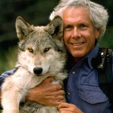 Wolves get a bad rap in folklore, but Jim and Jamie Dutcher spent six years (1990-1996) living among them to prove wolves aren't big bad guys. Living without electricity, running water, radio or phones, based on a yurt near Idaho's Sawtooth wilderness (which sees 5-6 feet of snow in winter), the couple socialized with a pack from the time they were pups, getting an unprecedented look at the pack's day-to-day life.