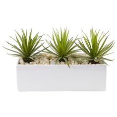 This small agave in planter consists of three individual plants in a rectangular ceramic planter. Perfect on a sofa table or as the centerpiece in your dining room. White planter will match any decor and decorative river rocks are included. Silk Plants, Fake Plants, Indoor Plants, Indoor Garden, Garden Plants, Blooming Succulents, Planting Succulents, Succulent Arrangements, Succulent Pots