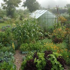 serre intégrée dans le potager -permaculture