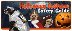 Halloween Costume Safety Guide-   Keep your pet safe this halloween with reliable leashes and safe halloween toys. It can also be easy to forget about what our pets may be feeling.