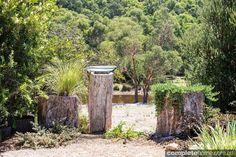 An Australian native garden design that seamlessly merges with the surrounding bushland to create a soothing landscape