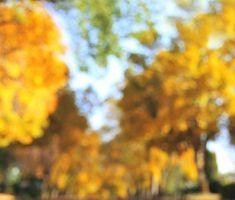 Best Photo Editing Backgrounds download - Tutorial Photoshop cc Blur Image Background, Desktop Background Pictures, Blur Background Photography, Studio Background Images, Background Images For Editing, Light Background Images, Picsart Background, Natural Background, Backgrounds Hd