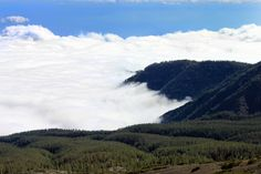 A sea of clouds in Tenerife - this shot appears to have been taken on the mountain side of Mt. Tiede, looking down over the National forest...I remember the view well, it's very beautiful.